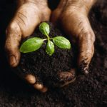 The Environment to Grow